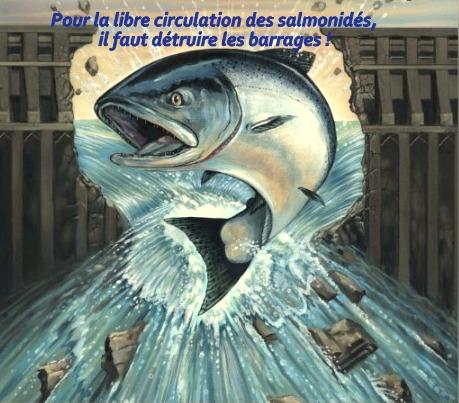 sélune,barrages,saumons,pêche à la mouche