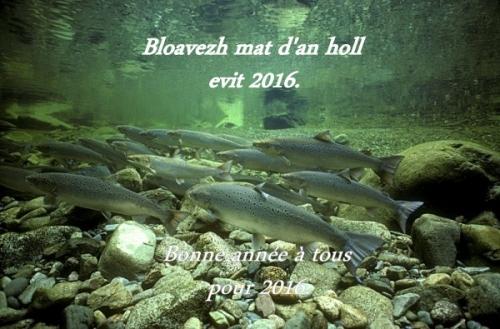 Saumon-sauvage-de-lAtlantique-dans-la-rivière-Alma-aussi-connue-sous-le-nom-de-rivière-Upper-Salmon-dans-le-Parc-national-de-Fundy-Nouveau-Brunswick-Canada.-©-Gilbert-Van-Ryckevorsel-WWF-Canada-600x395.jpg