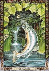 saumon de la sagesse.jpeg